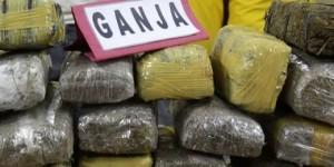 Ini Dia 18 Bungkus Ganja Ditemukan Teronggok di Gerbang UI, Depok, Selasa, (30/09/2014)